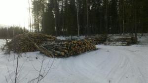 Otto Moilanen on hoitanut puiden ajon pehmeiköltä