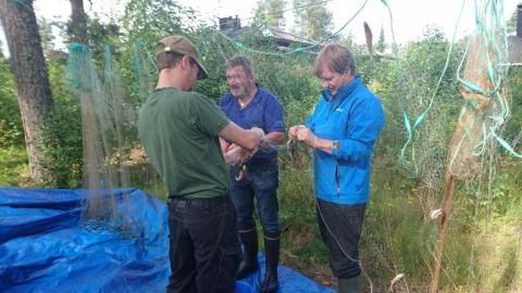 Kaloja irroittavat koeverkosta Miska Etholen, Kari Tiri ja Mikko Vuolteenaho